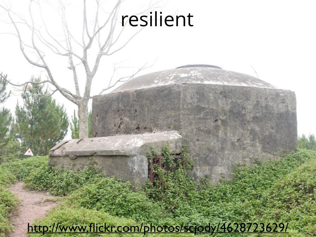 resilient http://www.flickr.com/photos/scjody/46...