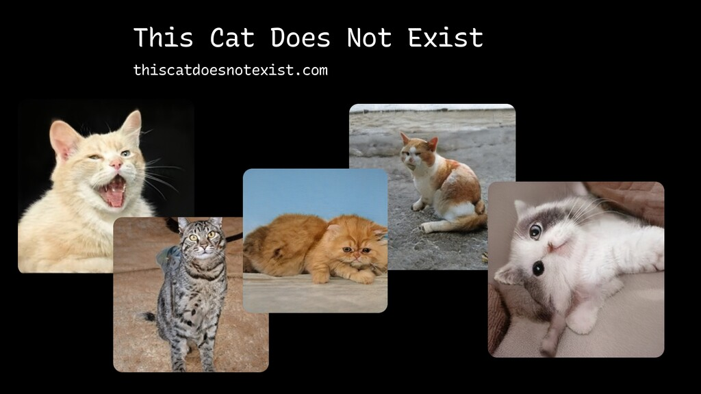 This Cat Does Not Exist thiscatdoesnotexist.com