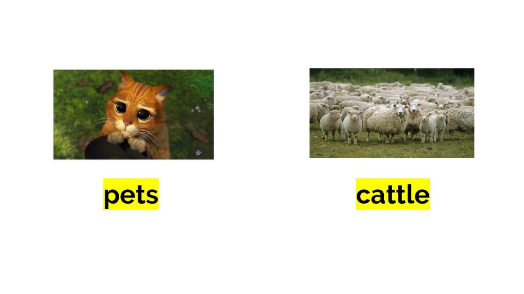 cattle pets