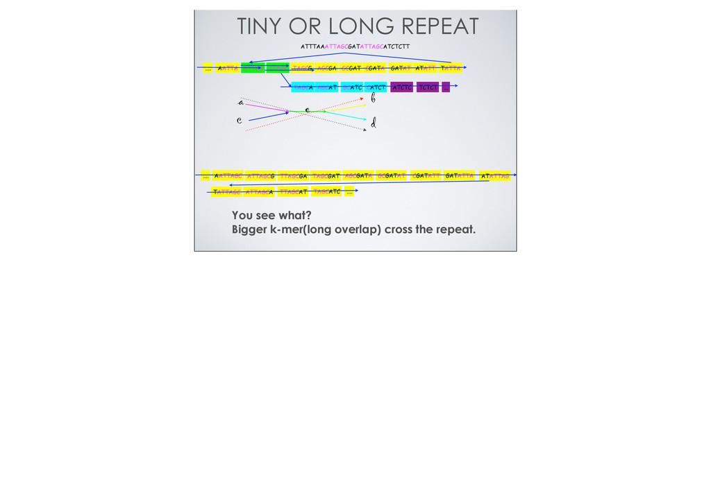 TINY OR LONG REPEAT ATTTAAATTAGCGATATTAGCATCTCT...