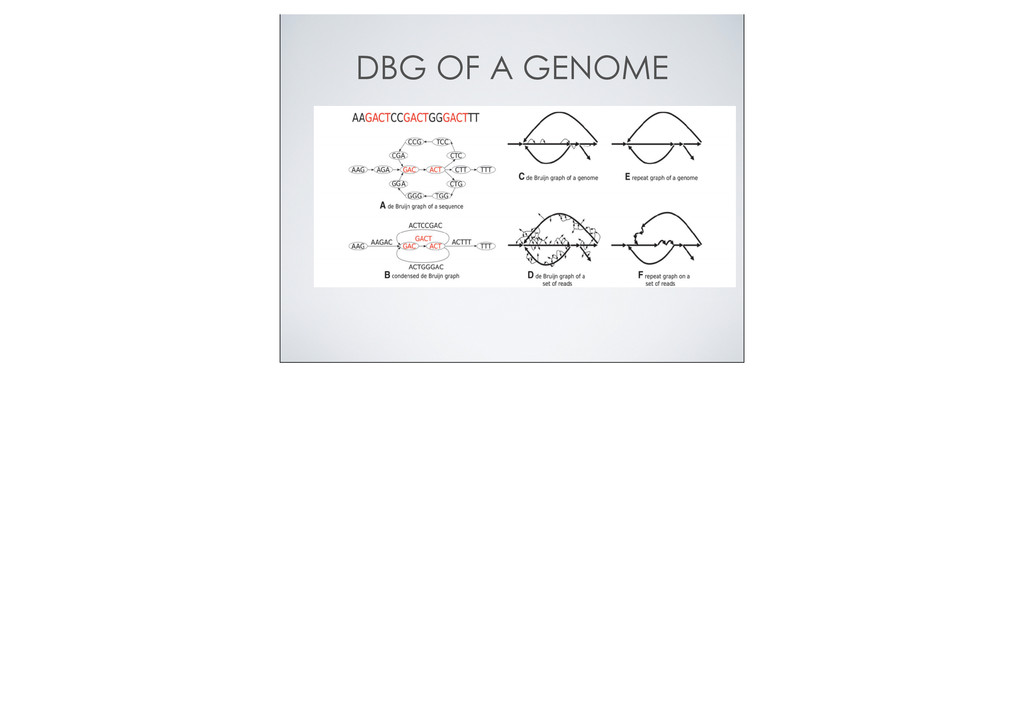 DBG OF A GENOME