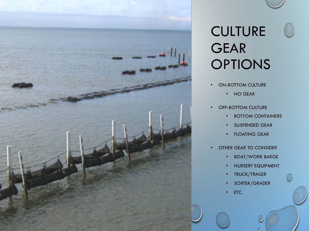 CULTURE GEAR OPTIONS • ON-BOTTOM CULTURE • NO G...