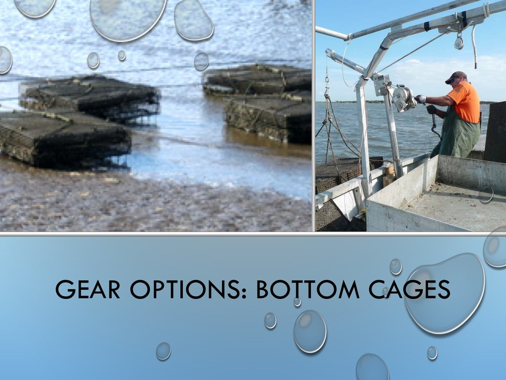GEAR OPTIONS: BOTTOM CAGES