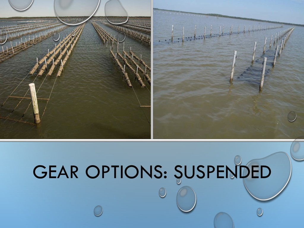GEAR OPTIONS: SUSPENDED