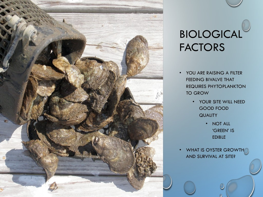 BIOLOGICAL FACTORS • YOU ARE RAISING A FILTER F...