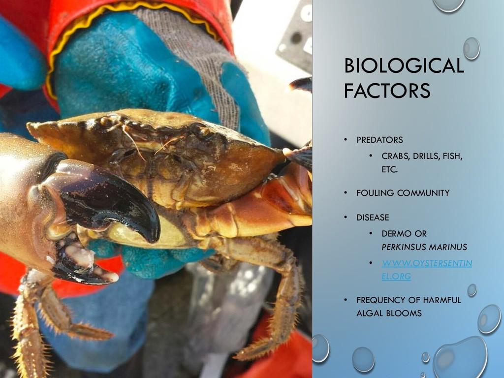 BIOLOGICAL FACTORS • PREDATORS • CRABS, DRILLS,...