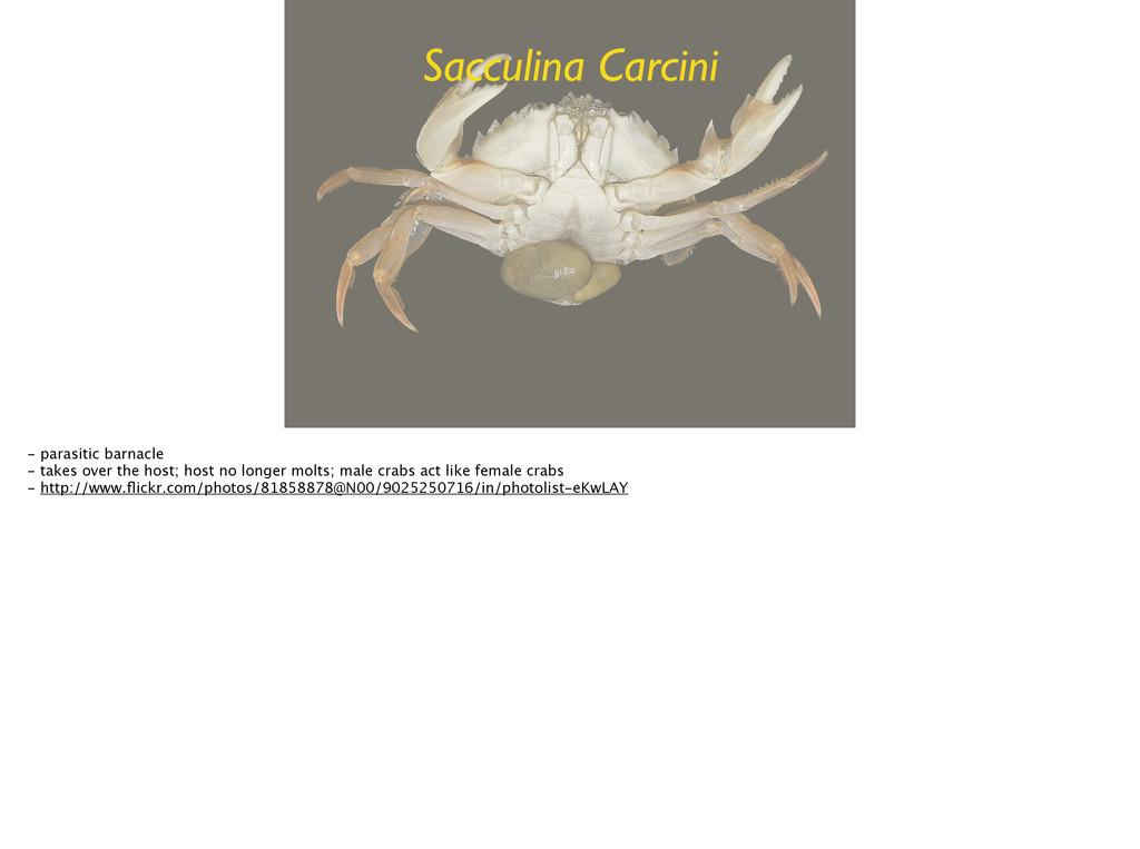 Sacculina Carcini - parasitic barnacle - takes...