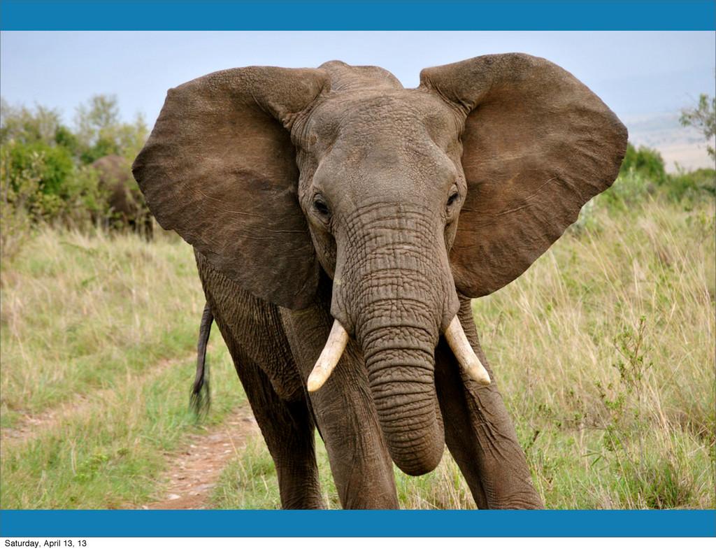 Elephant Saturday, April 13, 13