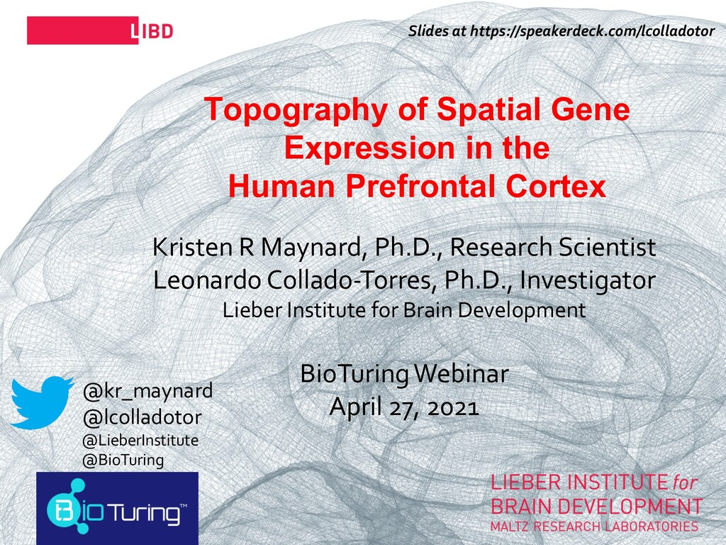 29 Topography of Spatial Gene Expression in the...