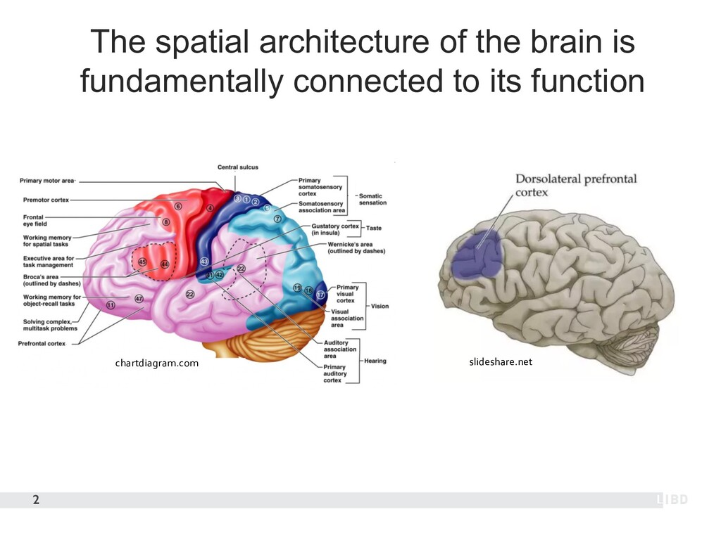 The spatial architecture of the brain is fundam...