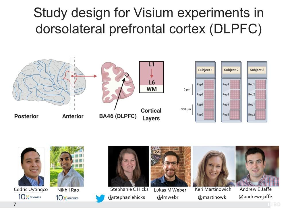 Study design for Visium experiments in dorsolat...