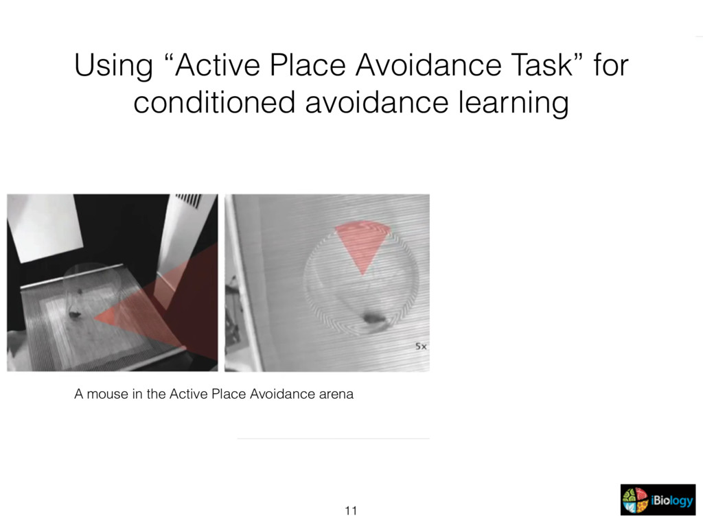 "11 Using ""Active Place Avoidance Task"" for cond..."