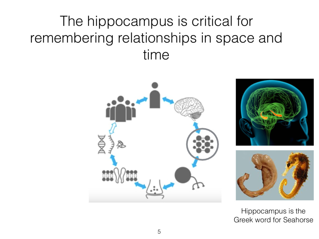 The hippocampus is critical for remembering rel...