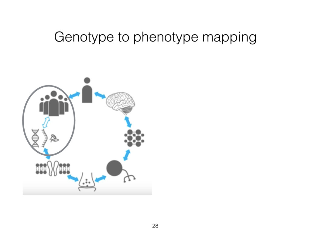 Genotype to phenotype mapping 28