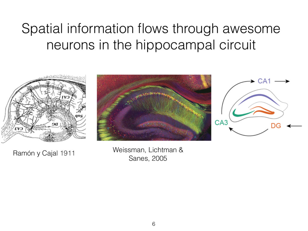 Spatial information flows through awesome neuron...