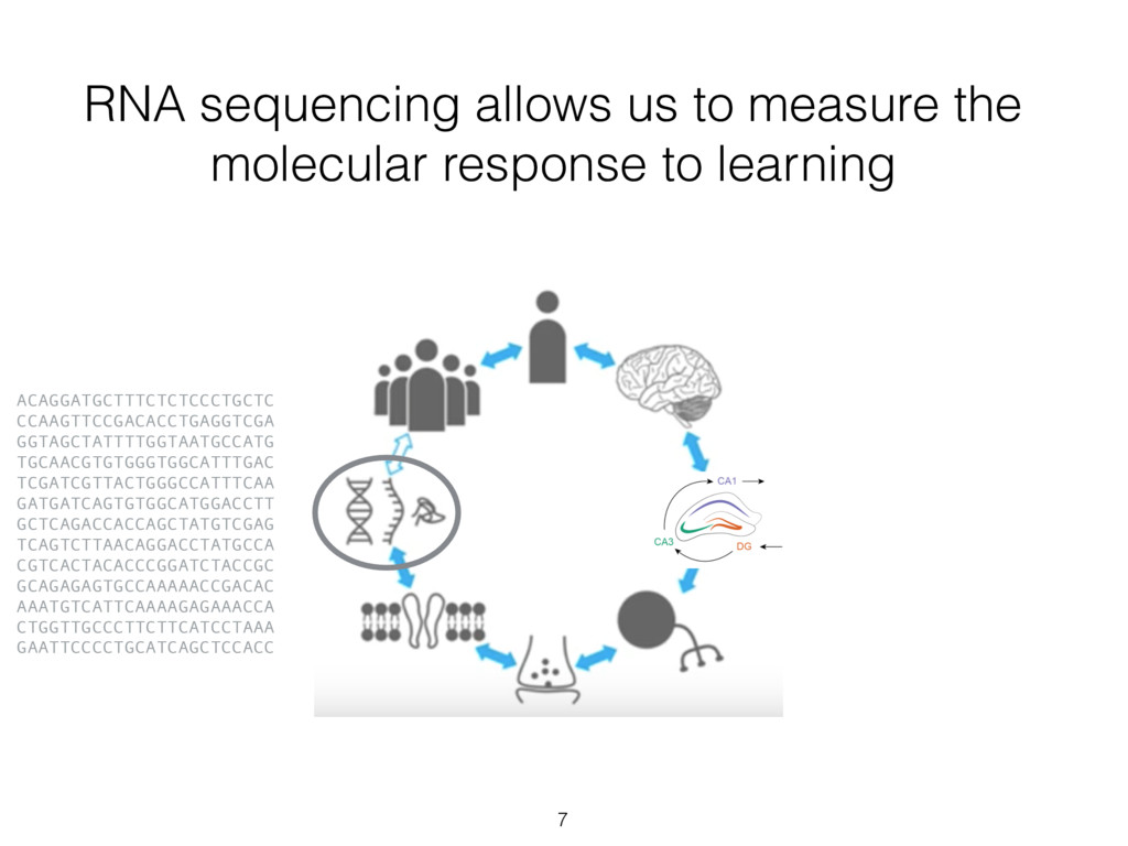 RNA sequencing allows us to measure the molecul...