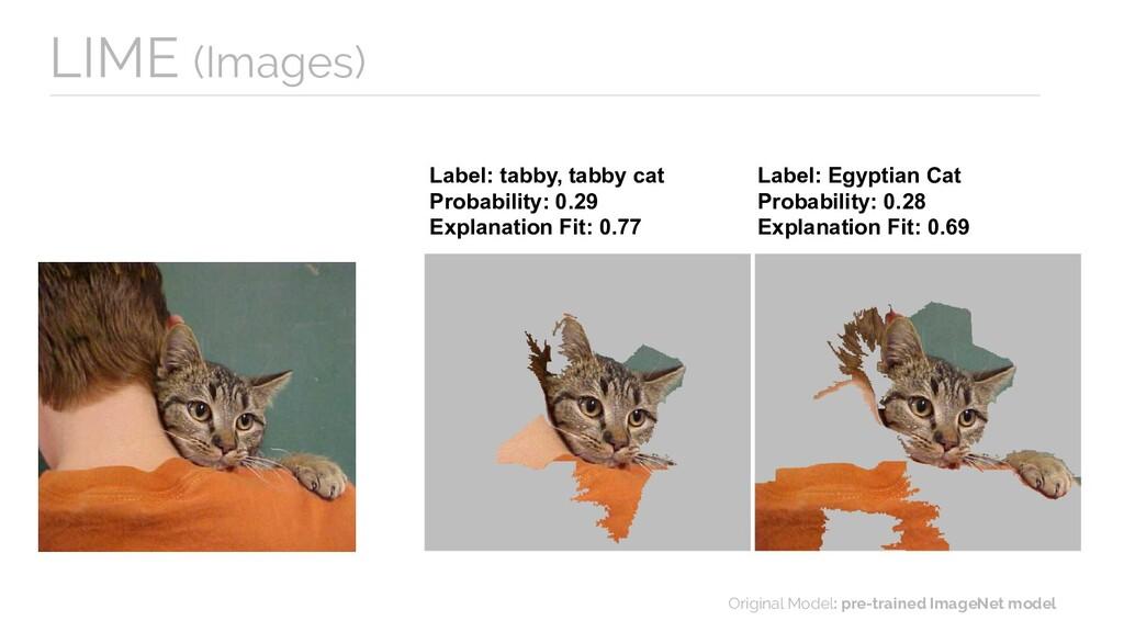 Label: tabby, tabby cat Probability: 0.29 Expla...