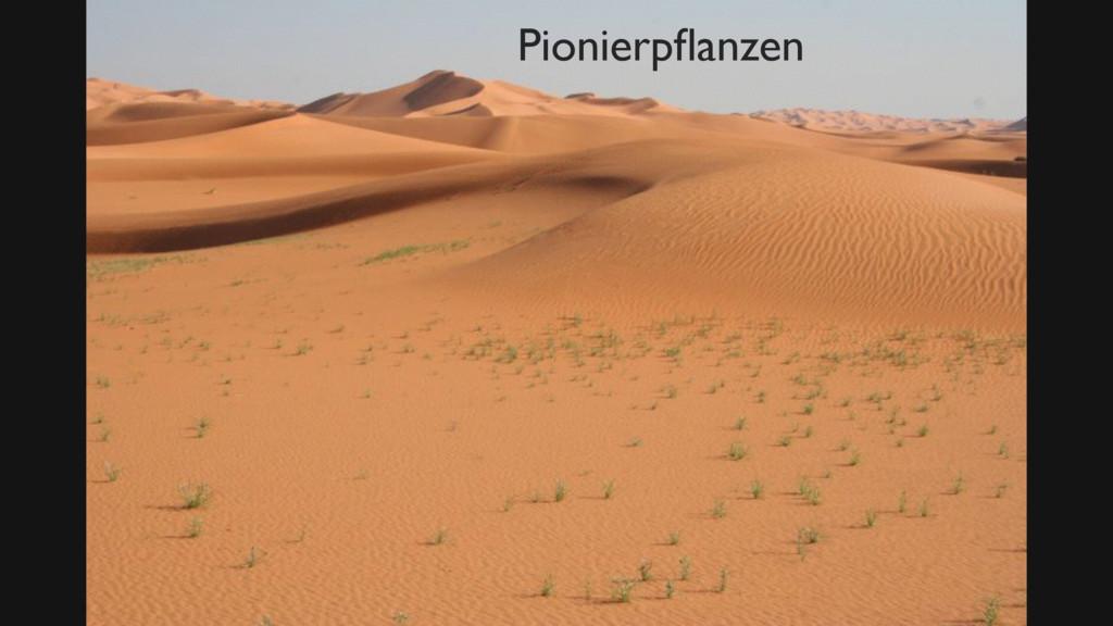 Bild Pionierpflanze Zitat Wiki Pionierpflanzen