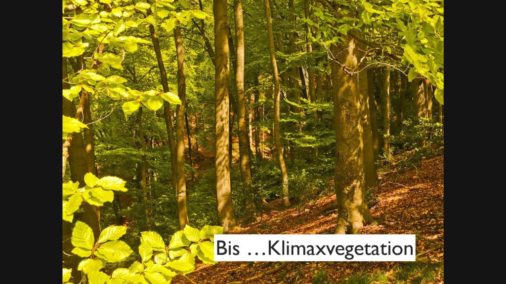 Bild Wald Zitat Wiki Bis …Klimaxvegetation