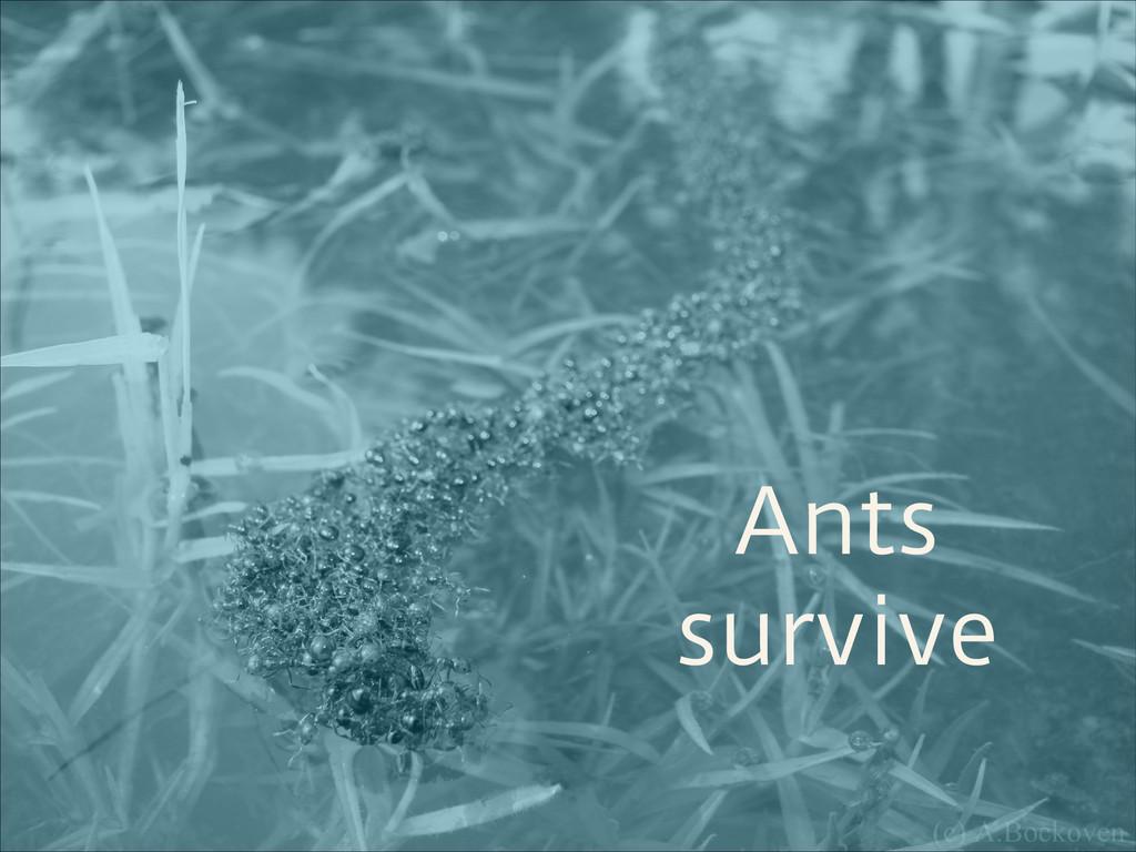 Ants survive