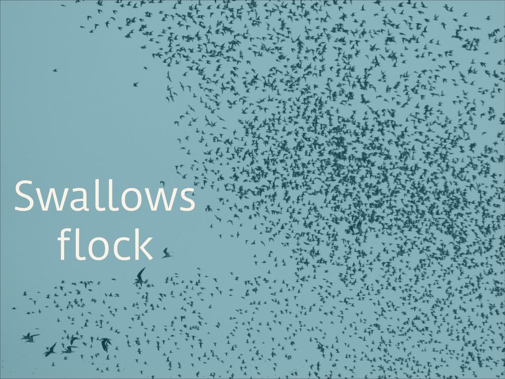 Swallows flock
