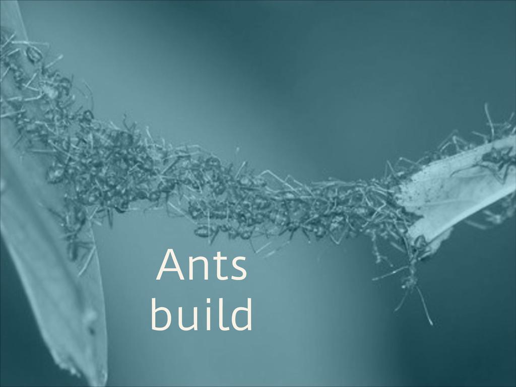 Ants build