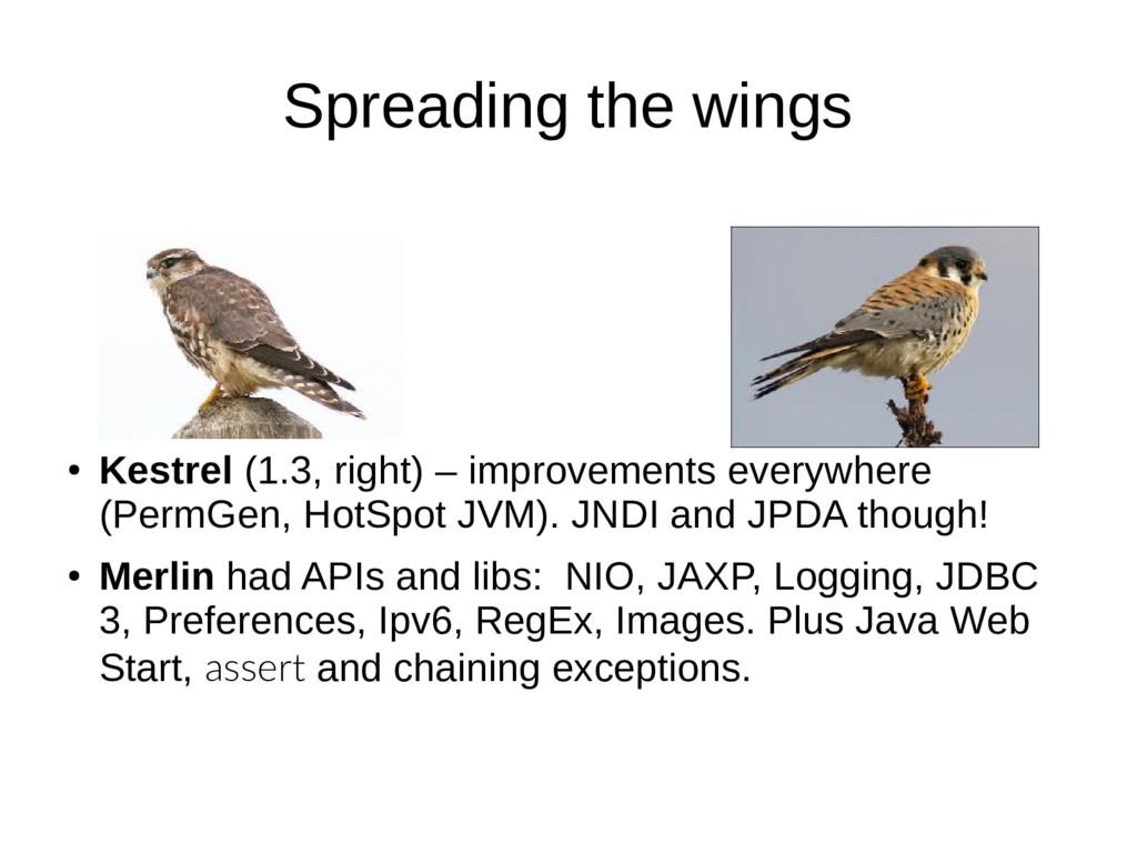 Spreading the wings ● Kestrel (1.3, right) – im...