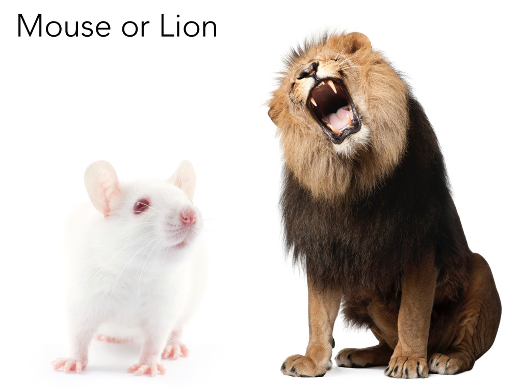 Mouse or Lion