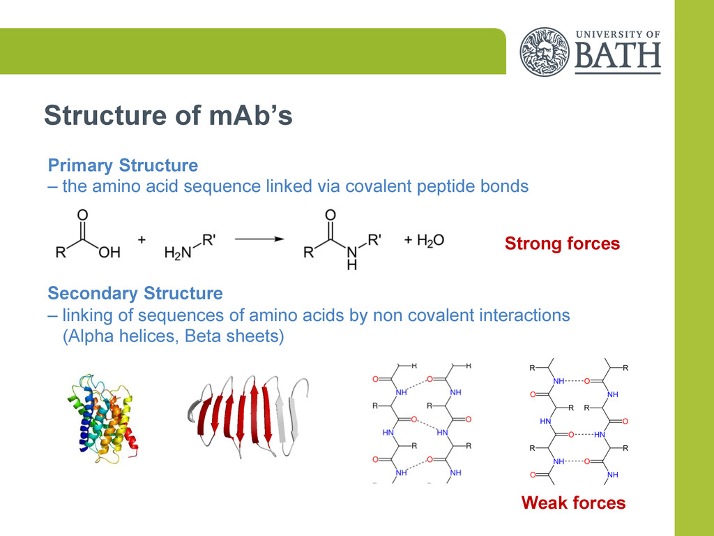 Structure of mAb's Primary Structure – the amin...