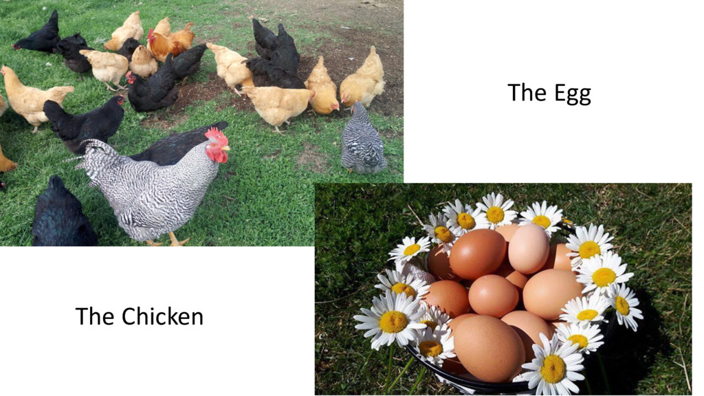 The Chicken The Egg