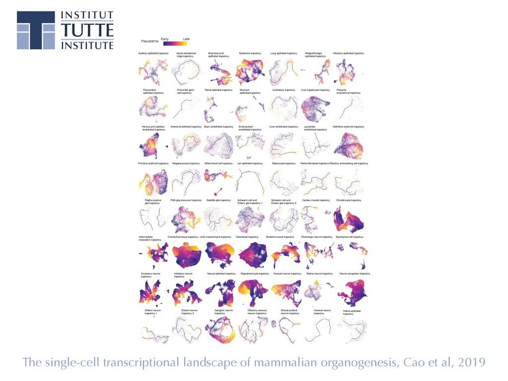 The single-cell transcriptional landscape of ma...