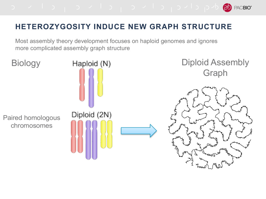 HETEROZYGOSITY INDUCE NEW GRAPH STRUCTURE Most ...