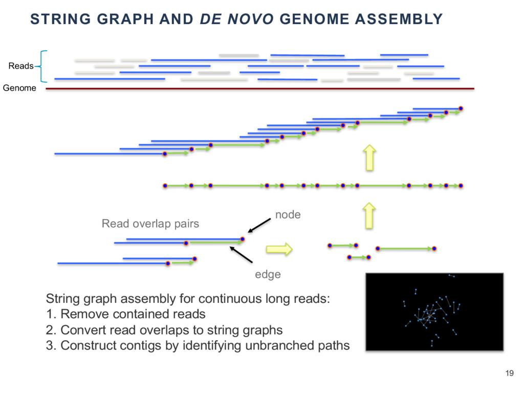 STRING GRAPH AND DE NOVO GENOME ASSEMBLY 19 Str...
