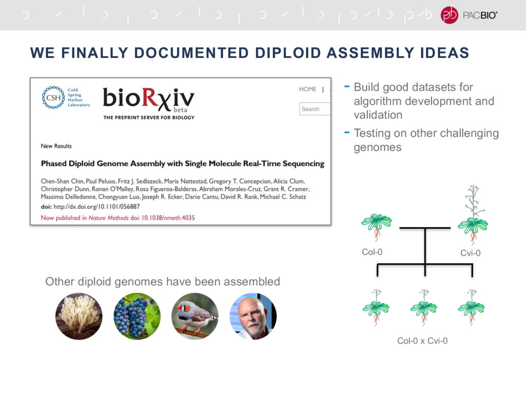 WE FINALLY DOCUMENTED DIPLOID ASSEMBLY IDEAS Co...