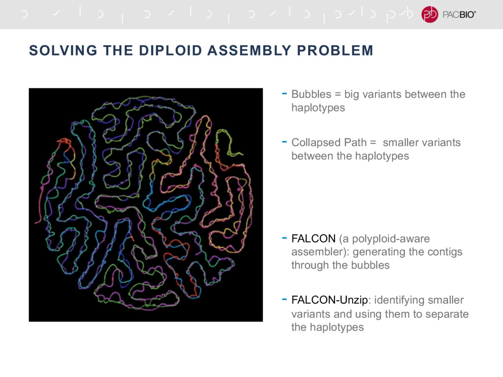 SOLVING THE DIPLOID ASSEMBLY PROBLEM - Bubbles ...