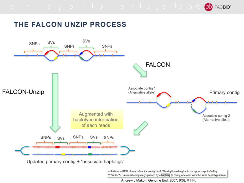 THE FALCON UNZIP PROCESS SNPs SNPs SNPs SVs SVs...