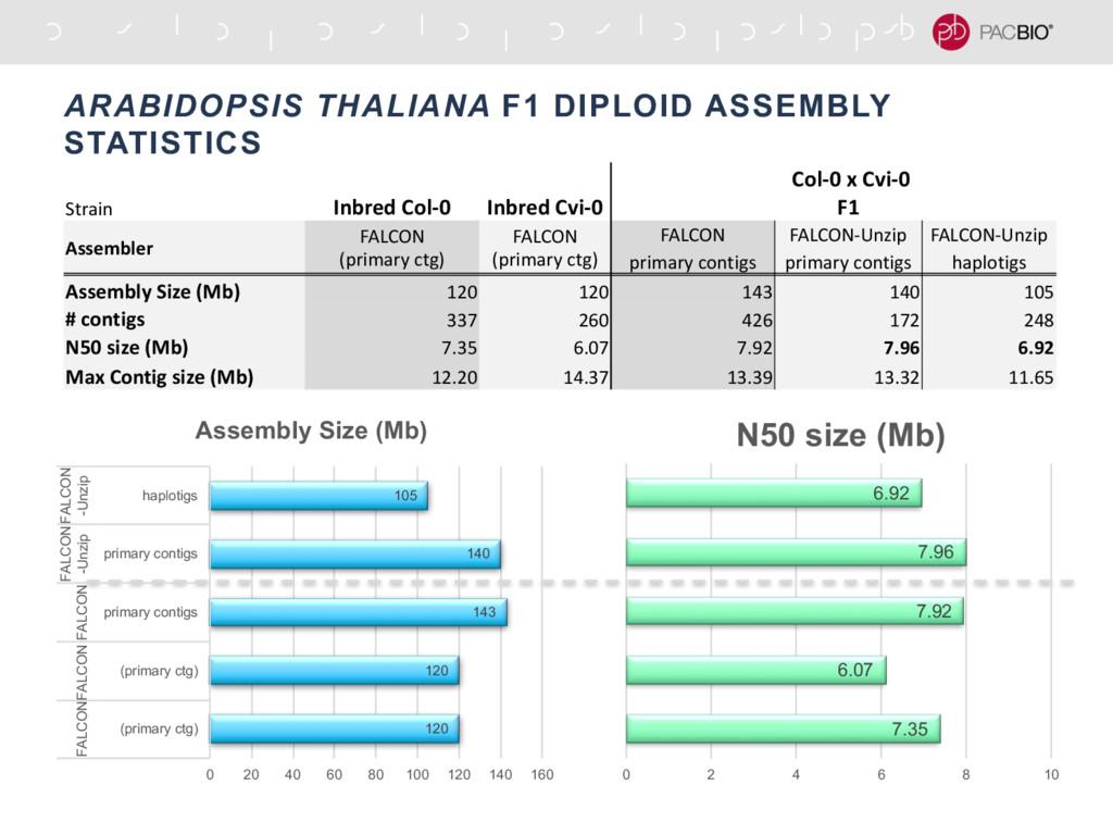 ARABIDOPSIS THALIANA F1 DIPLOID ASSEMBLY STATIS...