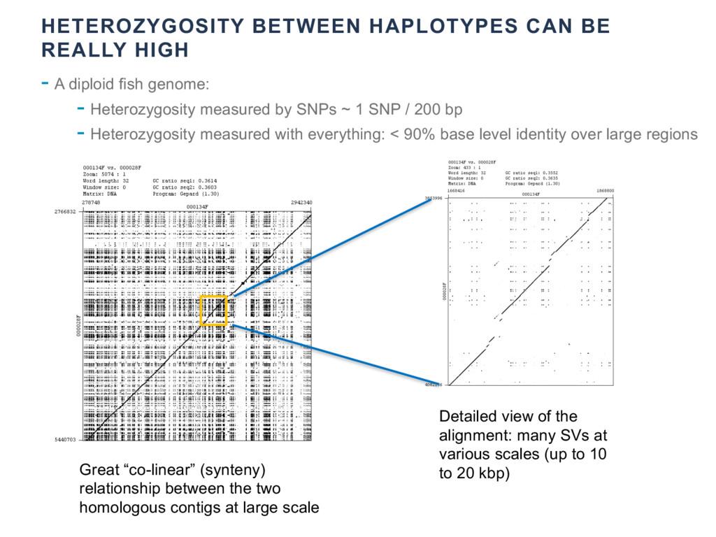 HETEROZYGOSITY BETWEEN HAPLOTYPES CAN BE REALLY...