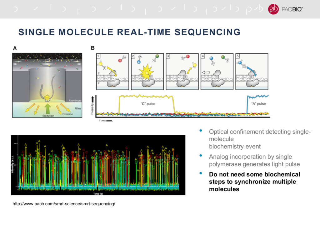 SINGLE MOLECULE REAL-TIME SEQUENCING http://www...