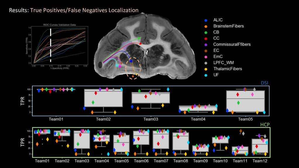 HCP DSI Results: True Positives/False Negatives...