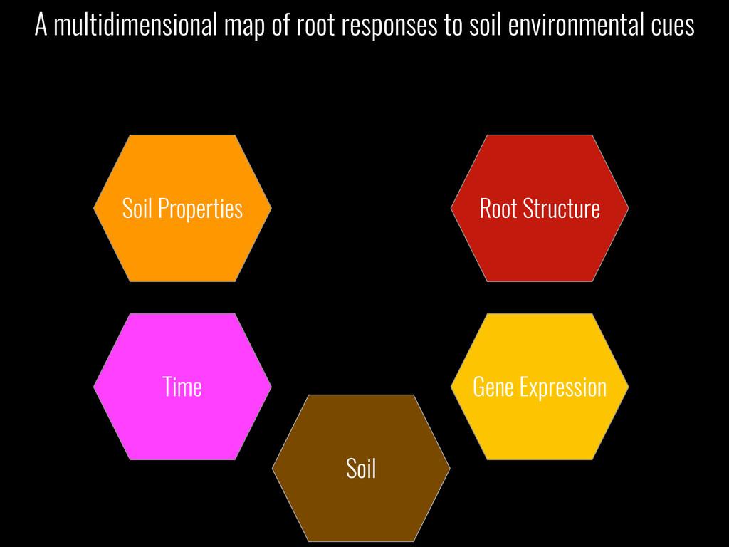 Soil Soil Properties Time Root Structure Gene E...