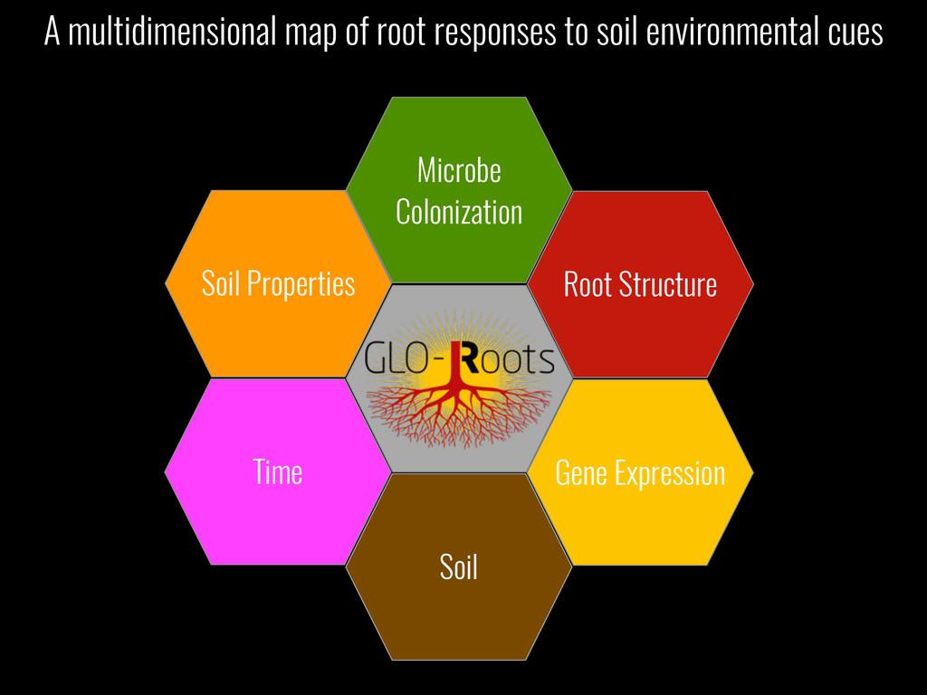 Soil Microbe Colonization Soil Properties Time ...