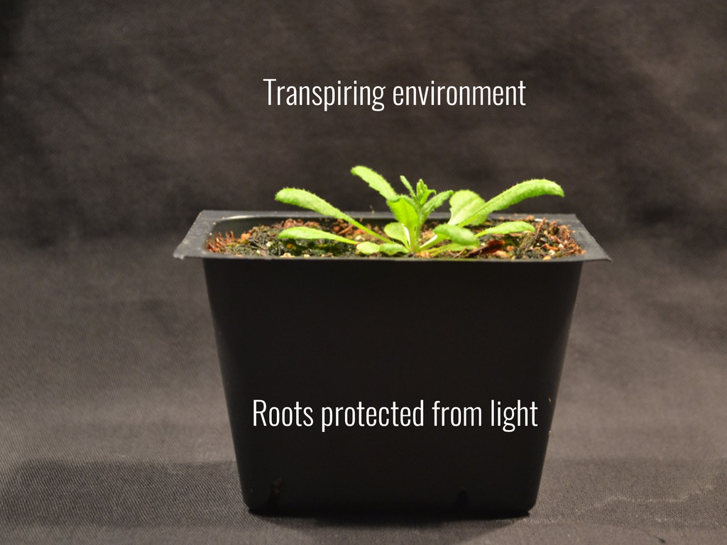 Transpiring environment Roots protected from li...