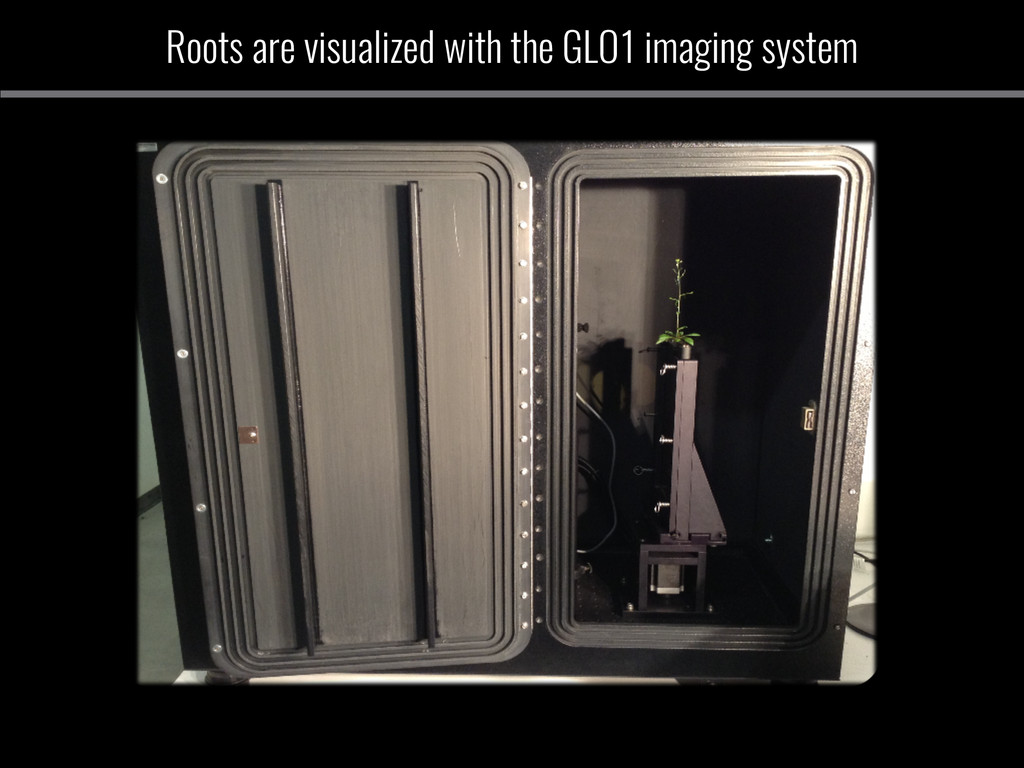Roots are visualized with the GLO1 imaging syst...