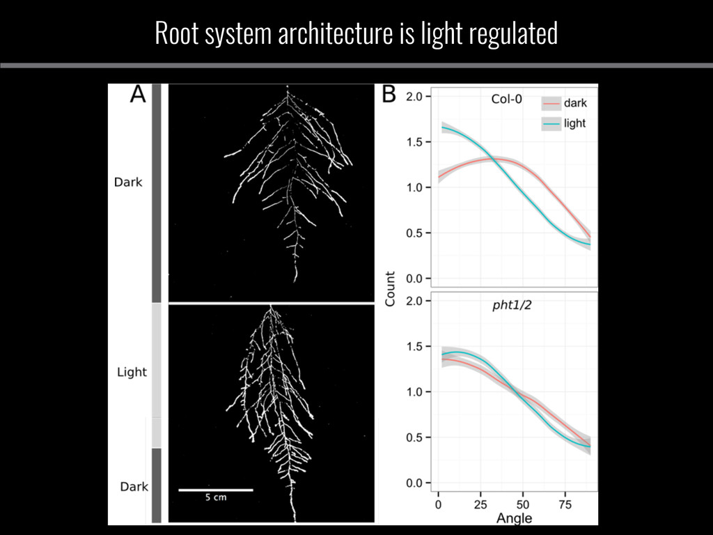 Root system architecture is light regulated