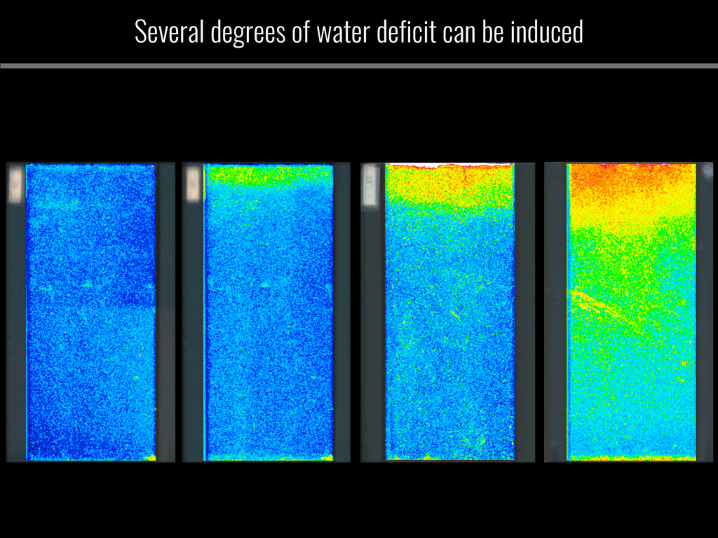 Several degrees of water deficit can be induced