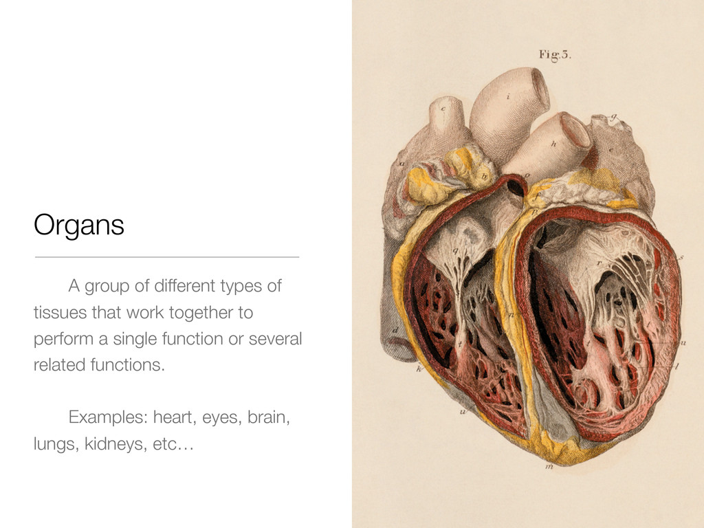 Organs A group of different types of tissues th...