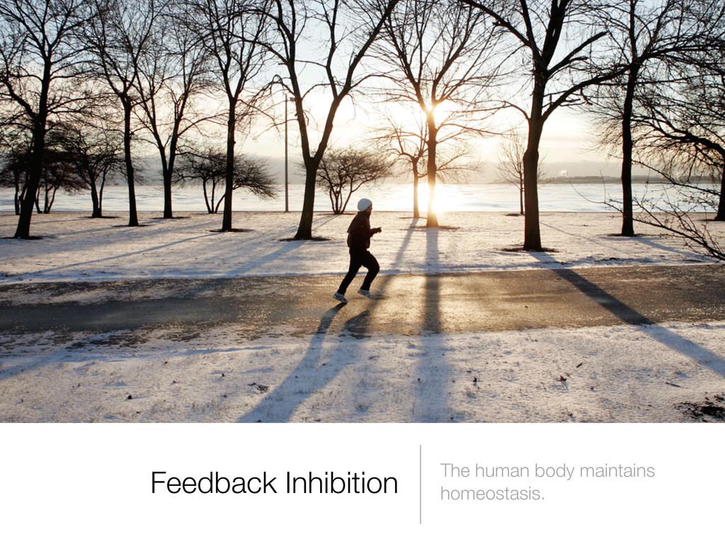 The human body maintains homeostasis. Feedback ...