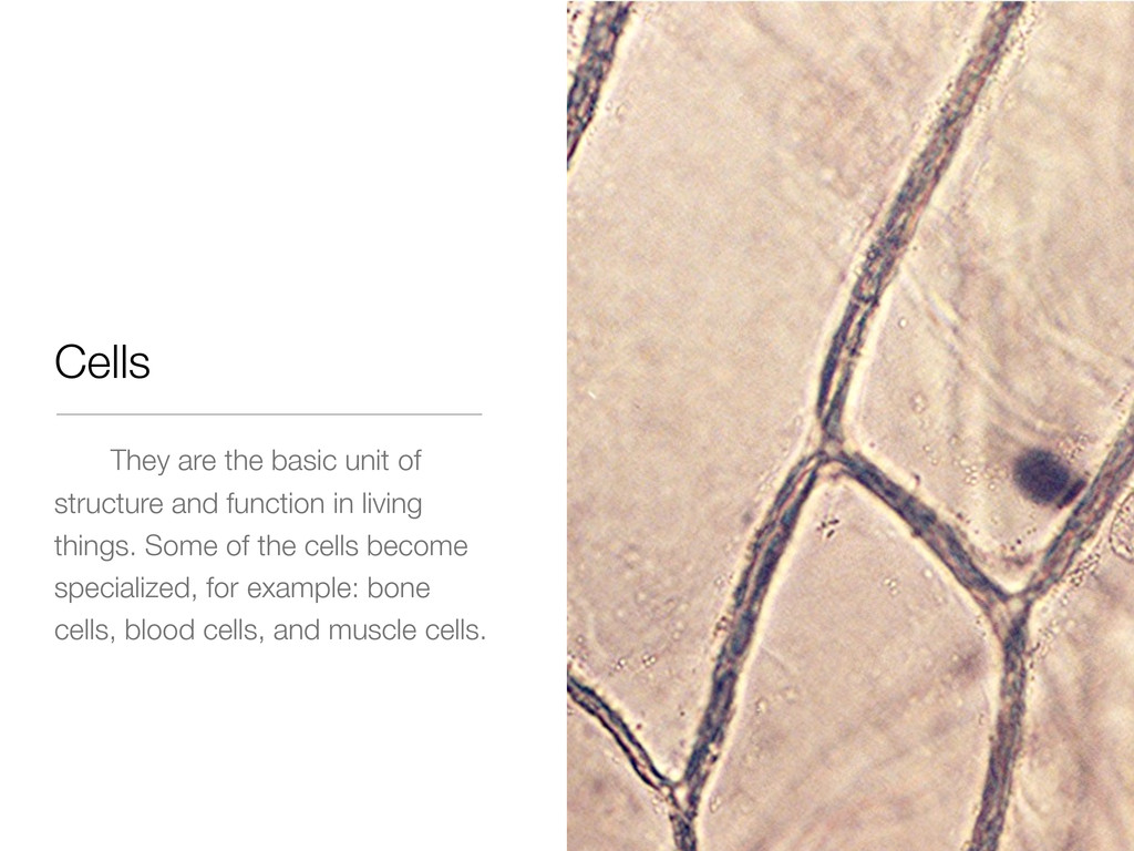 Cells They are the basic unit of structure and ...