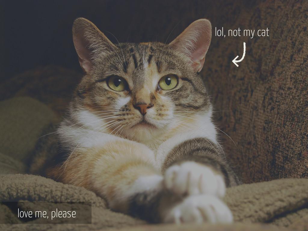 love me, please lol, not my cat